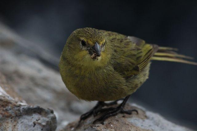 enrico gasperi_ Il Big Canary di Jane Green (ph. Rukaja Johaadien)